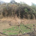 5. Cropping in shifting cultivation