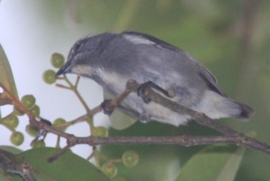 flowerpecker sp4